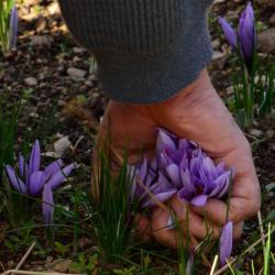 Ceuillette des fleurs