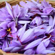 Récolte des fleurs